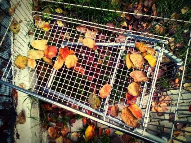 autumn-cart-1147856746