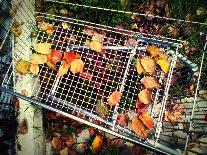 autumn-cart-1147856746