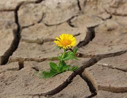 deserto fiore