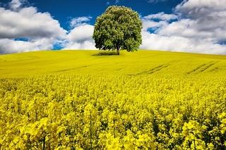 spring-1376388__340.jpg