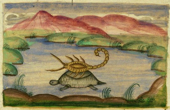 tortoise_and_scorpion