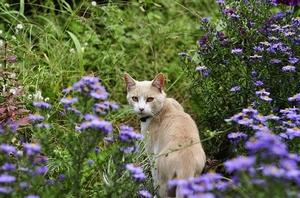 cat-1696236__340.jpg