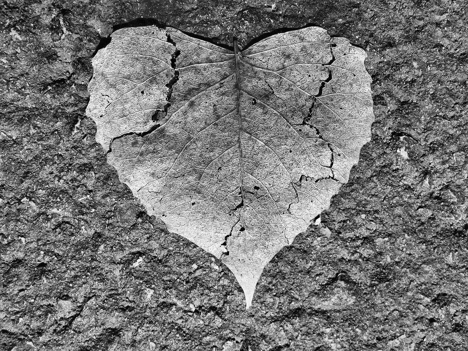 heart-742712_960_720.jpg
