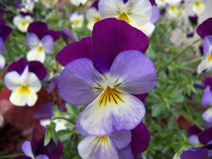 immagini-fiori_NG1