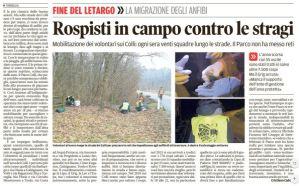 mattino_2018-02-02_colli-migrazione-rospi-mobilitazone-volontari
