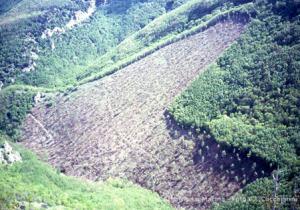 rio-vitoschio-taglio-impattante-su-bosco-invecchiato-oltre-30-anni-in-area-di-grande-pregio-naturalistico