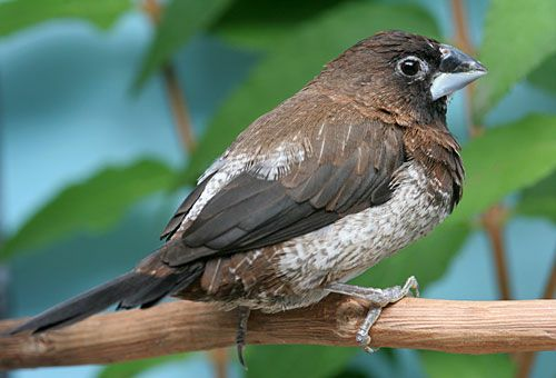 Un passero
