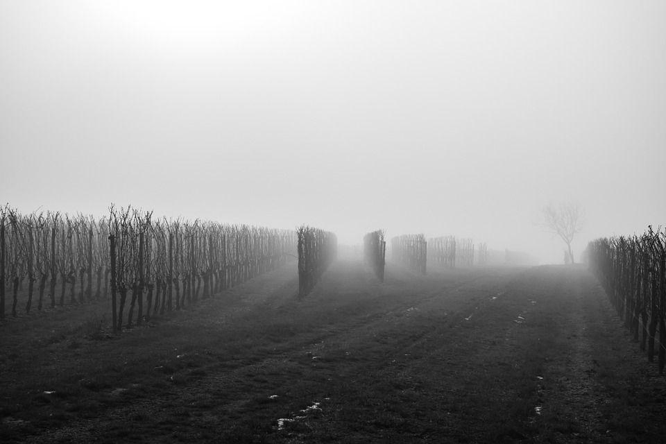 vineyard-639798_960_720.jpg
