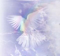 colomba_angelo