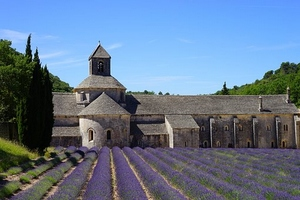 lavender-1595658__340.jpg