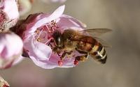 flower-3316074__340.jpg