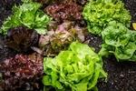 salad-2376777__340