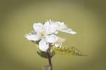 blossom-1602787__340