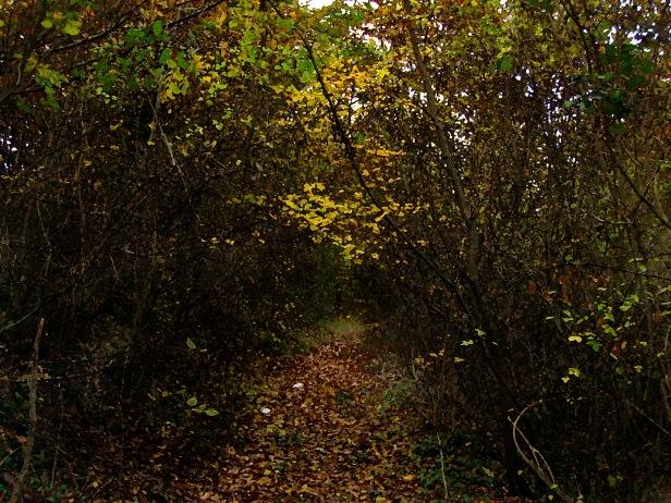strada-bosco-uno.jpg