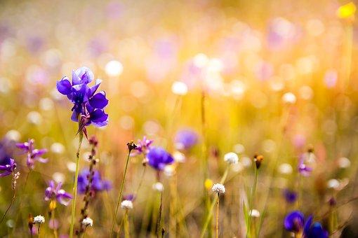 flowers-3182324__340