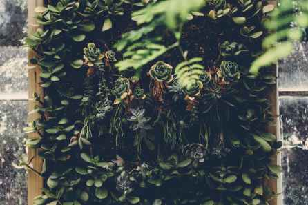 beautiful botanical environment foliage