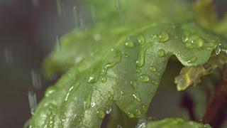 una giornata di pioggia