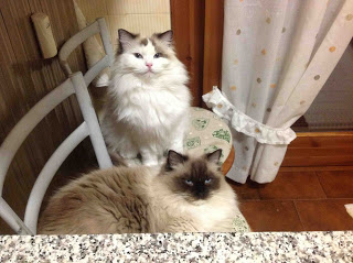 Wollie and Margot, my cats