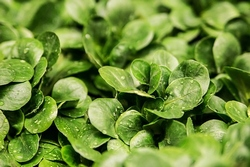 salad-264826__340