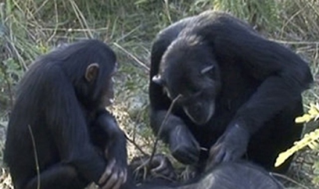 scimmie.jpg