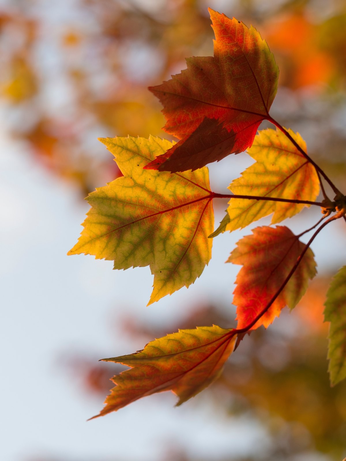 Il nome suo è autunno, EmilyDickinson