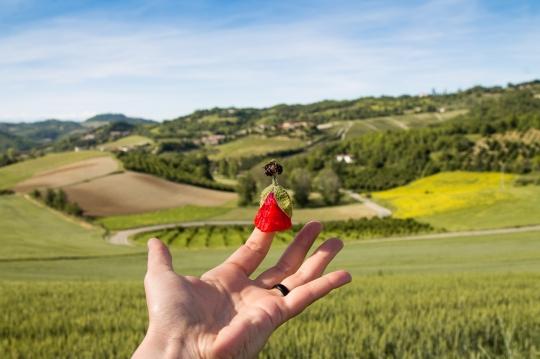 itaca Monferrato paesaggio