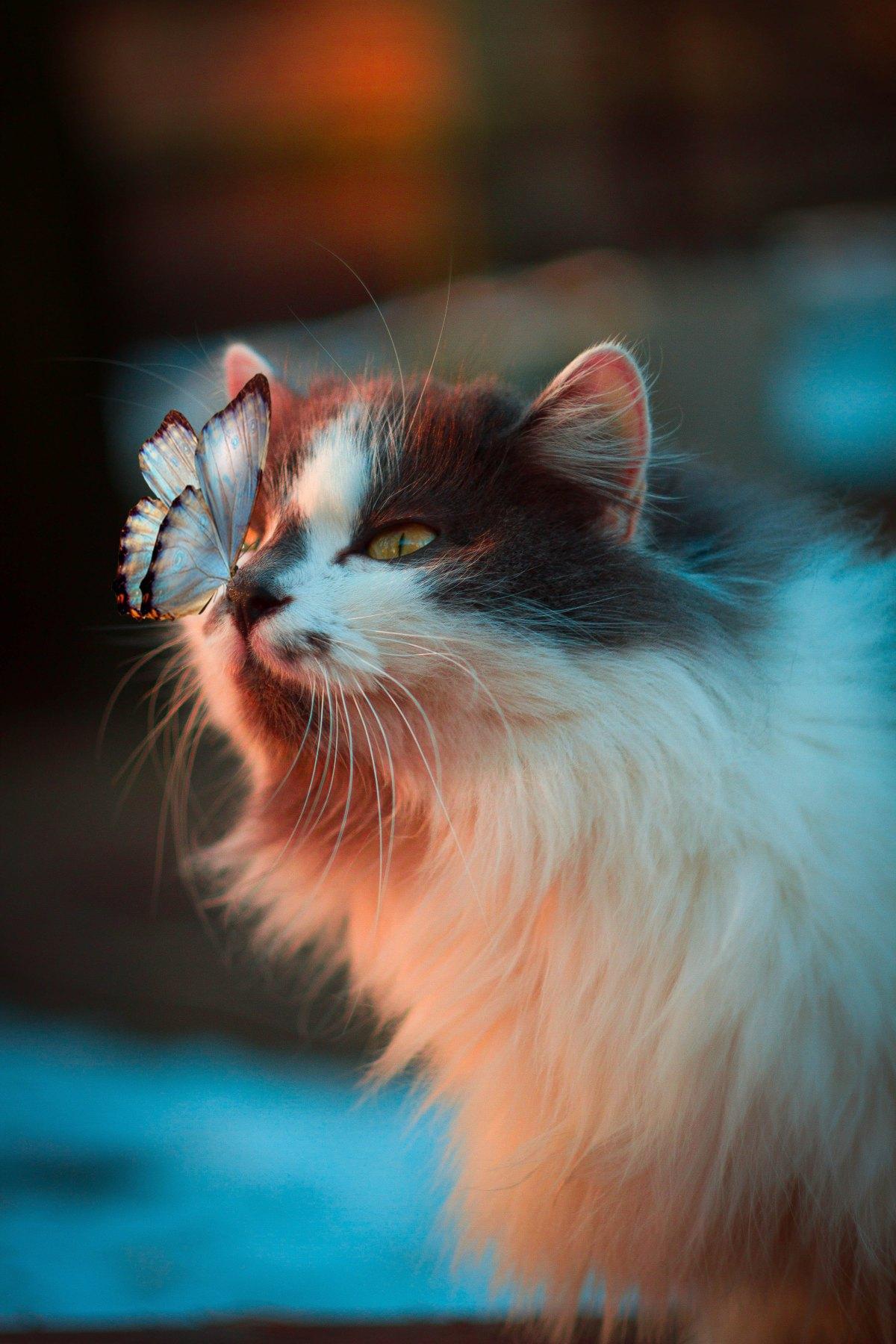"Citazione da ""Sui gatti"", CharlesBukowski"