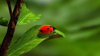 ladybird-163480__340