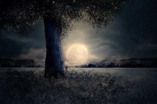 night-2539411__340 (1)