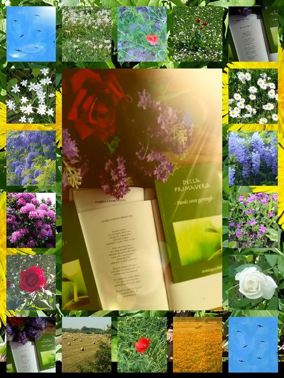 Ultimi giorni di primavera – poesia e foto di FiorellaFiorenzoni