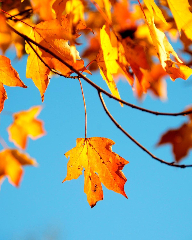 Albero in autunno, HermannHesse