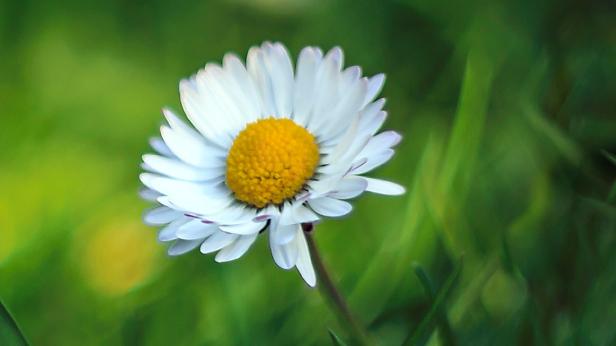 02 Come un fiore - Cover [R1] 1080p