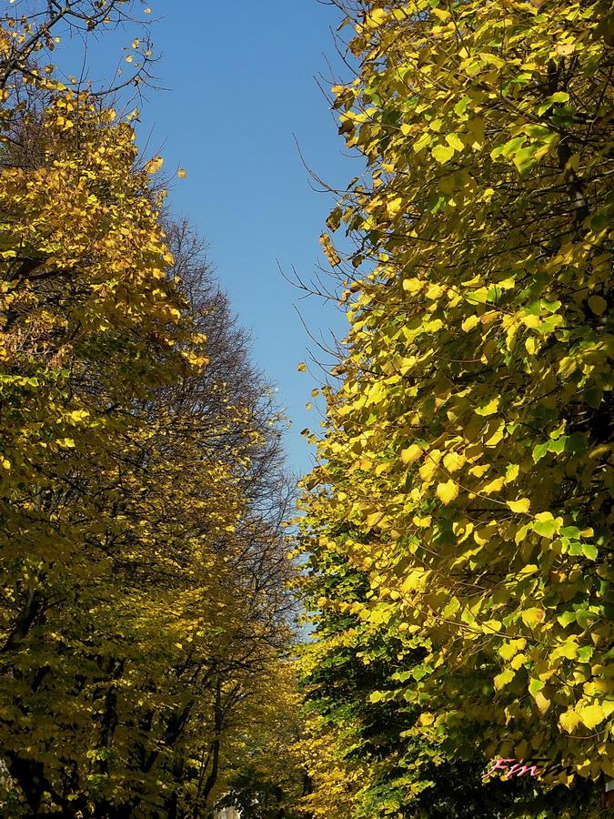 Santarcangelo di Romagna Foliage