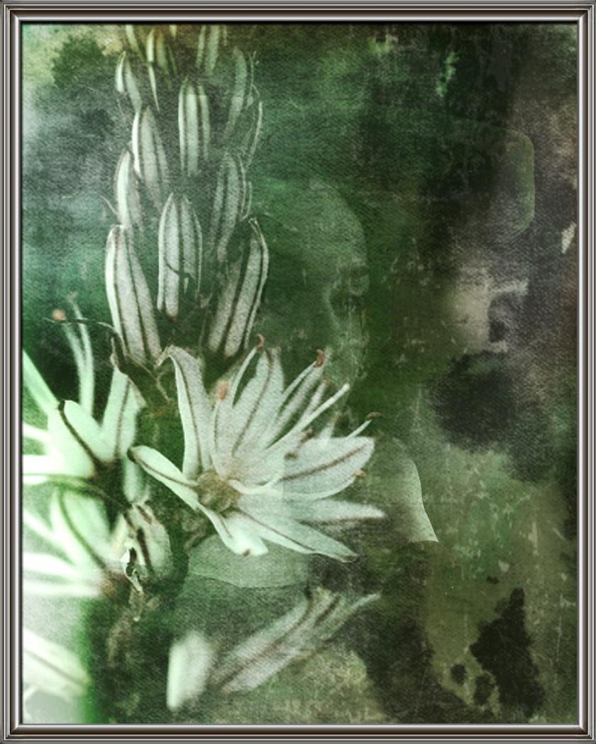 quel fiore verdognolo...
