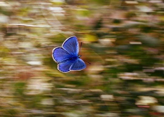 butterfly-2837589_960_720