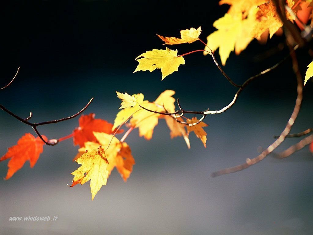 in quest'autunno