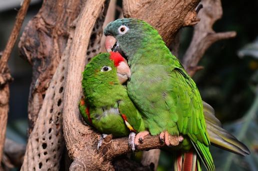parrot-1271428_960_720