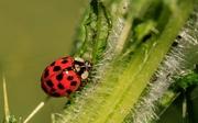 ladybug-3442106__340.jpg