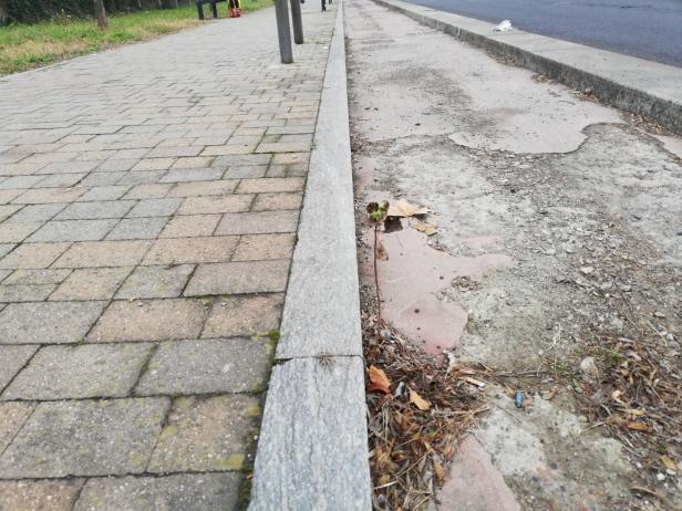 piantina nel cemento