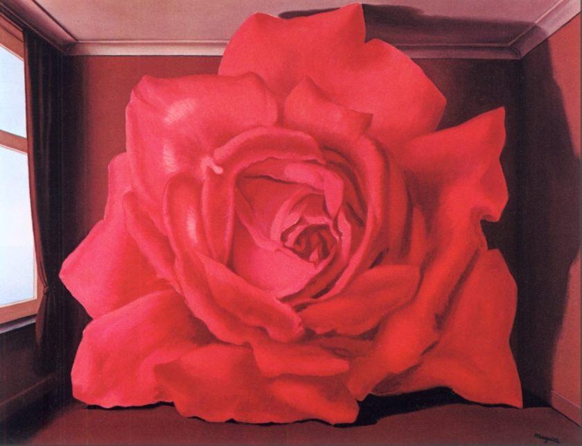 Una rosa.jpg