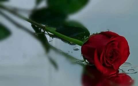 na rosa per te