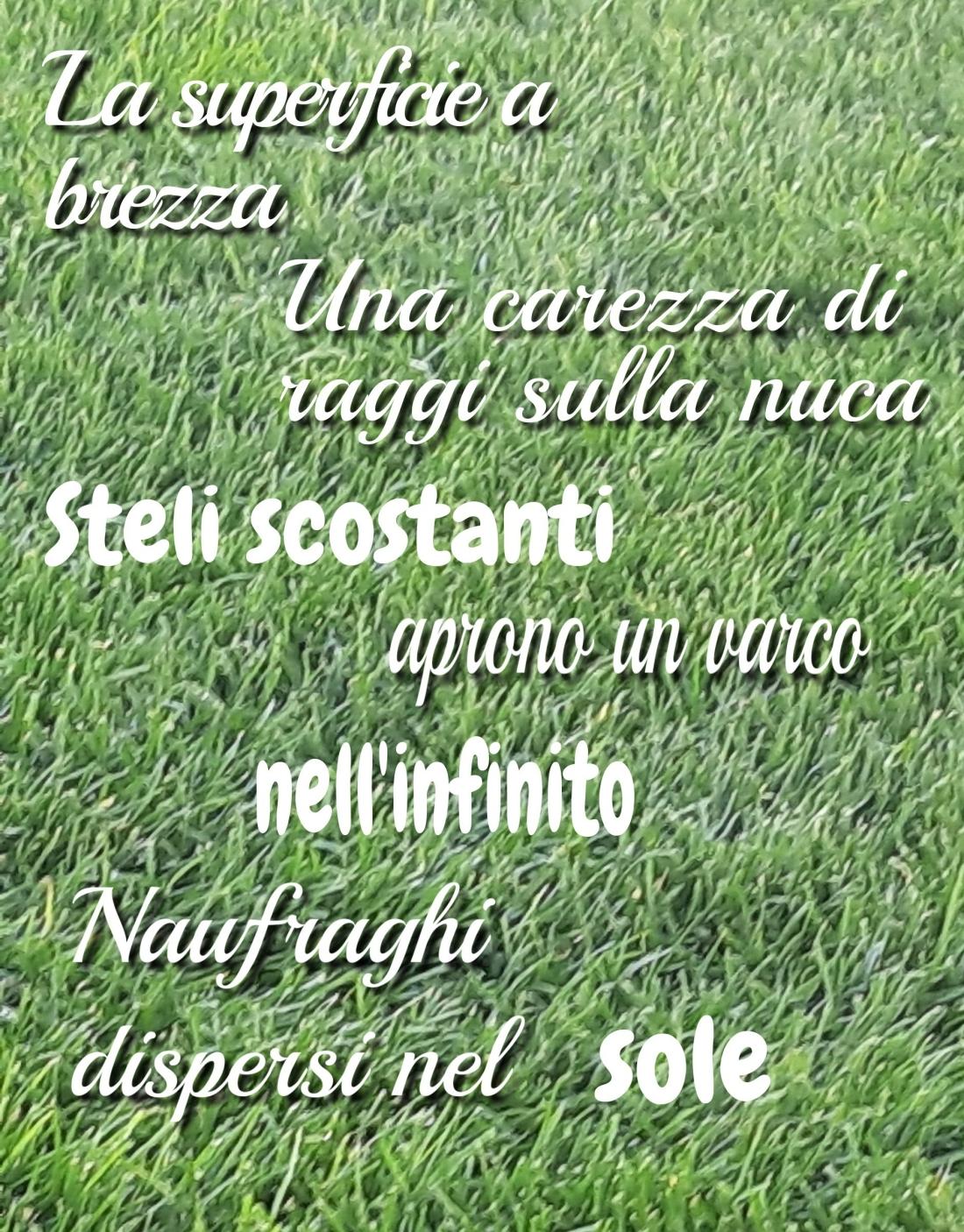Poesia poesia amore sole erba alessandrasolina