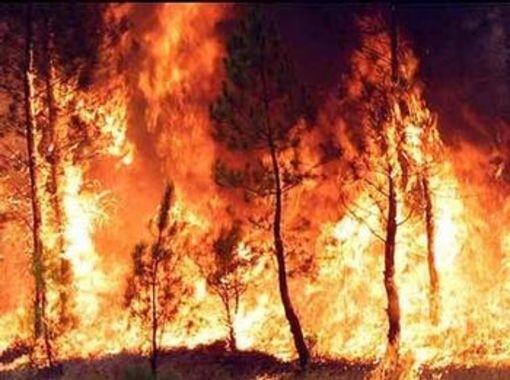 gallery.630x380.incendio_boschivo_82981