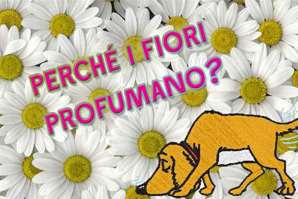 profumo_fiori.jpg