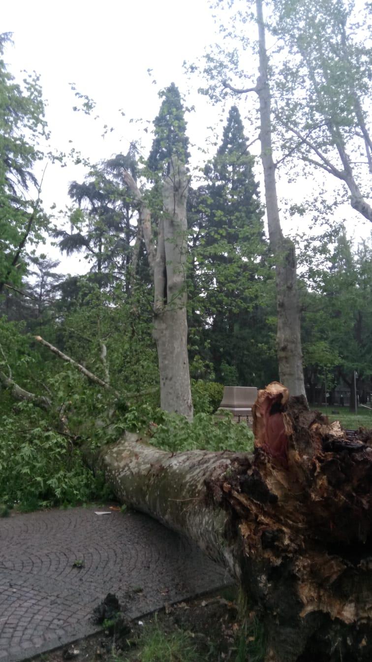 albero PHOTO-2019-04-26-14-37-05