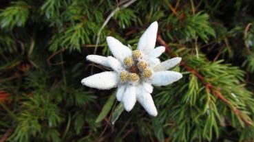 alpine-star-1644033_1920