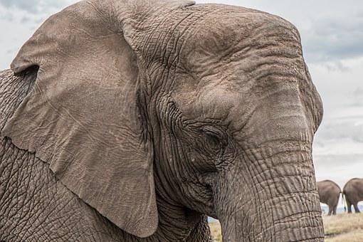 elephant-1526709__340