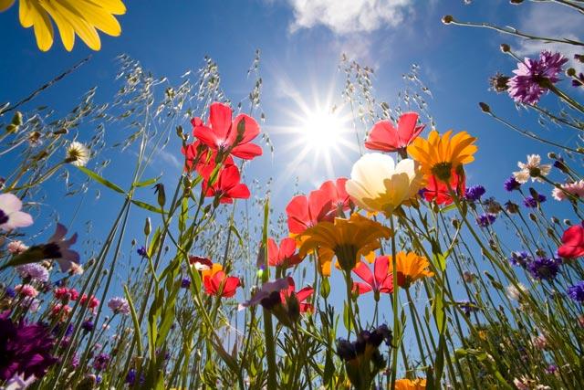 fiori-dal-basso-corbis-42-27041373