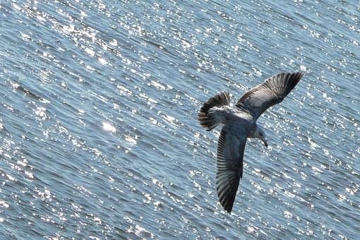 flying-54986__340