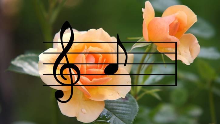Musica-e-Piante.jpg